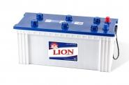 Lion-291